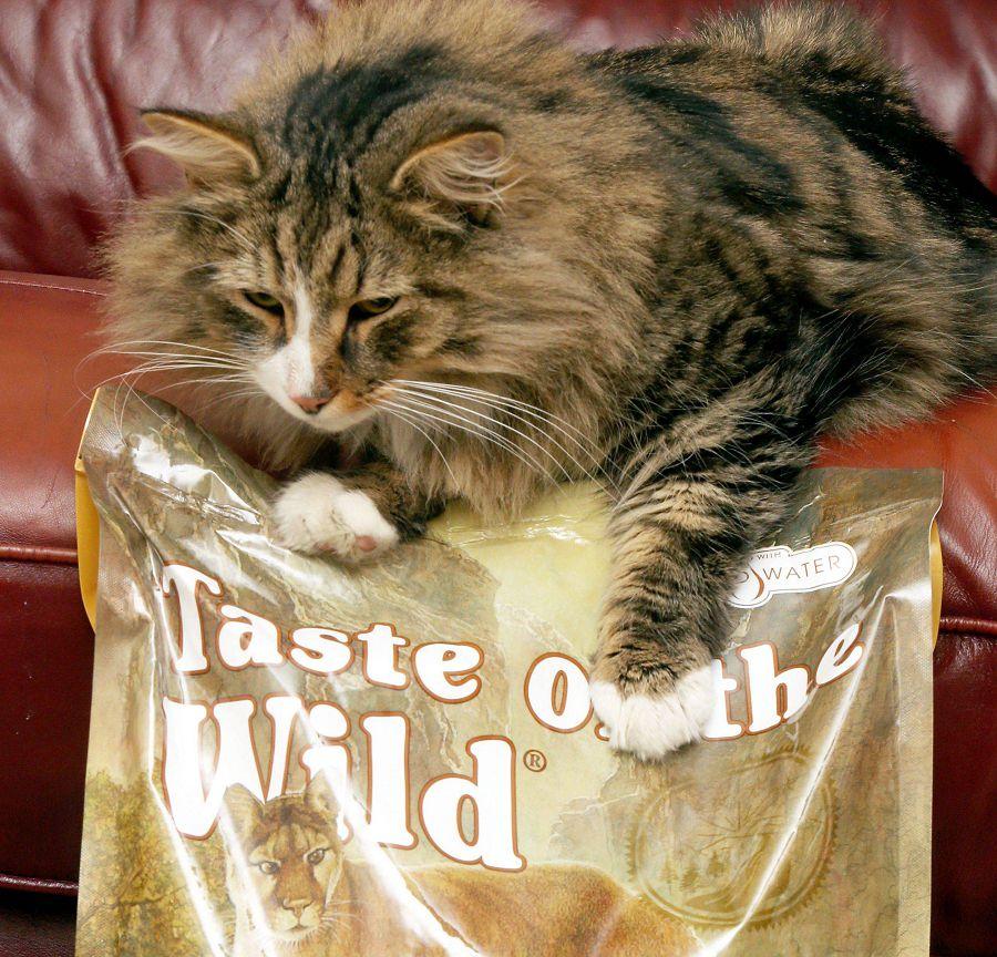 Рай для кота: 1,5 года жизни на фабрике по производству корма