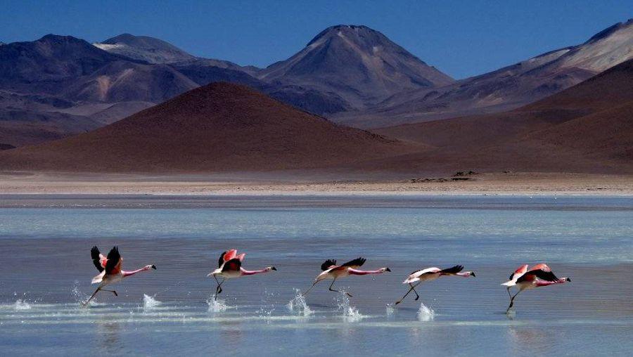 Самое большое в мире природное зеркало: солончак Уюни