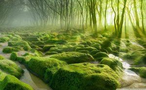 самые красивые леса в мире