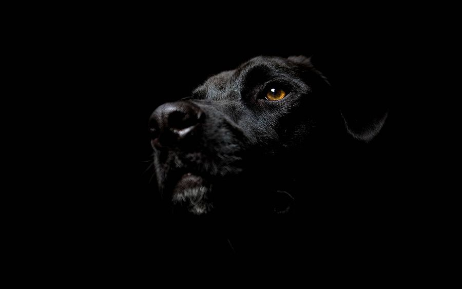 черный цвет
