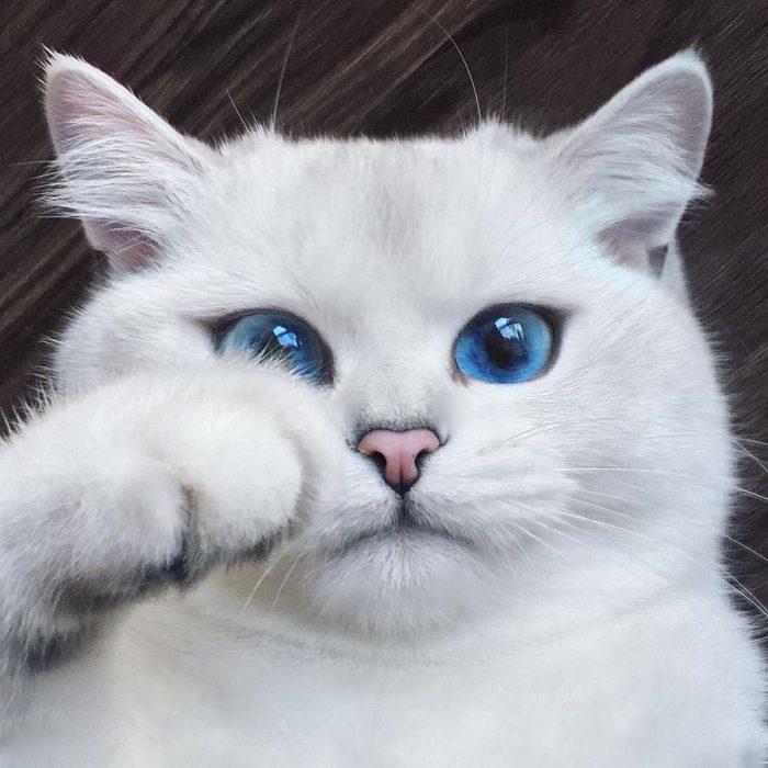 Кот Коби с самыми красивыми в мире глазами покорил Instagram