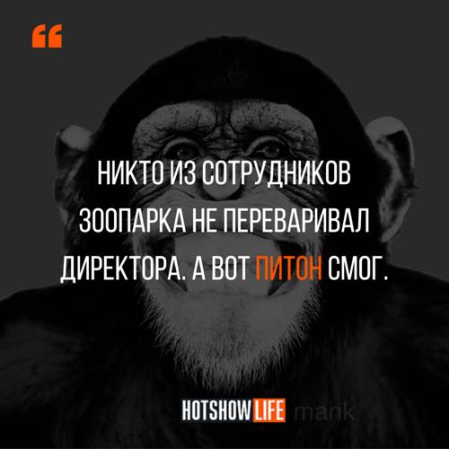 mank смешная цитата
