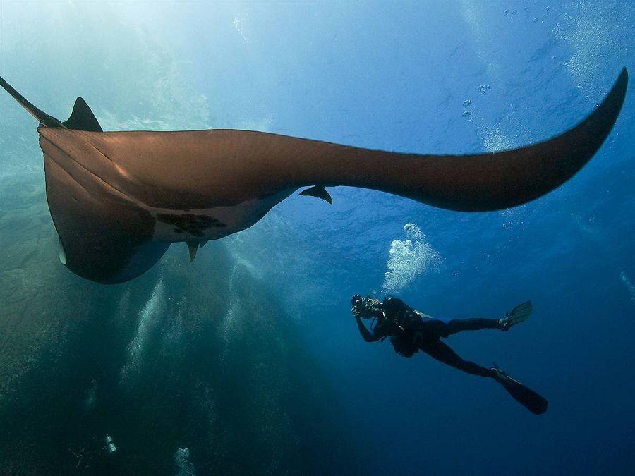 Самые огромные обитатели морских глубин