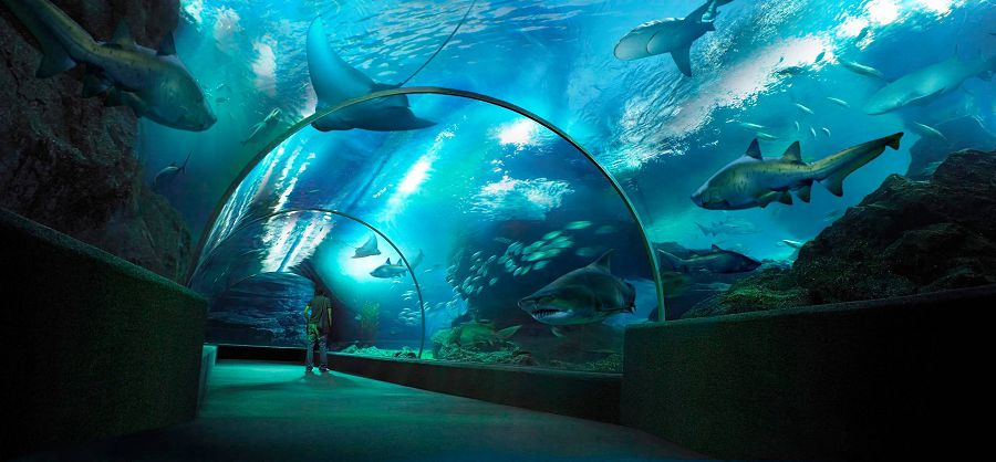 аквариум лучшее