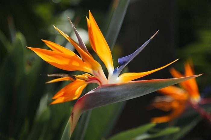 Топ-10 самых удивительных цветов мира