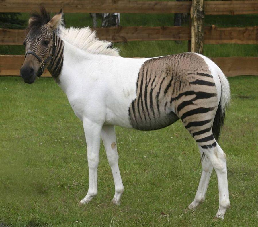 гибриды животных