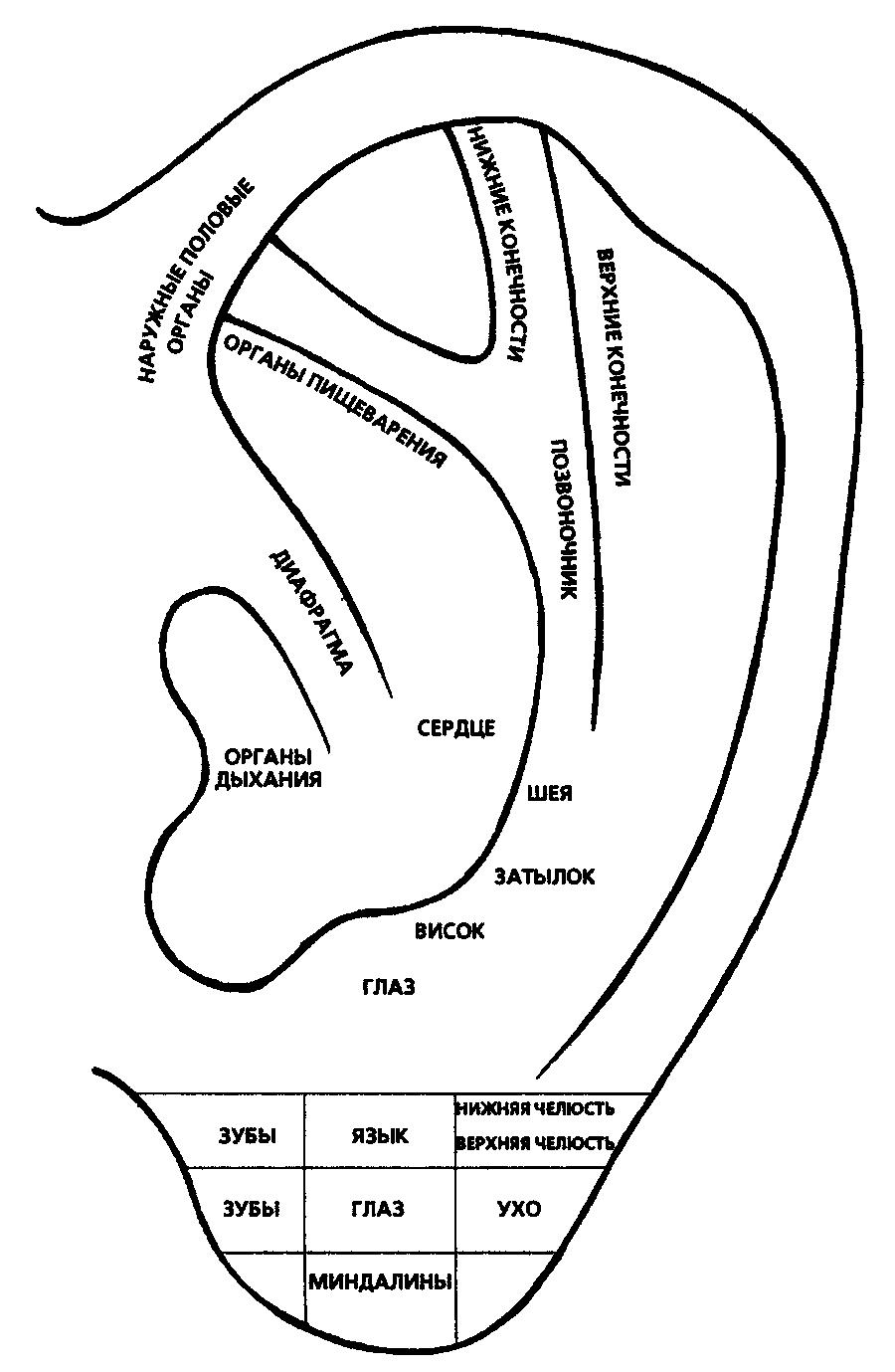 Точки акупунктуры уха