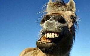 лошадь ржет