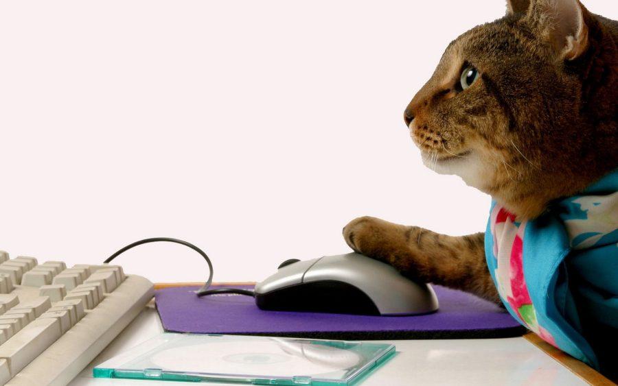 кот за компьютером
