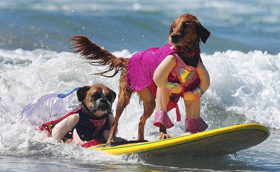инструктор по серфингу