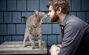 Топ-10 причин завести кота