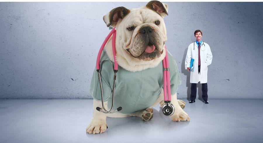 собака-врач