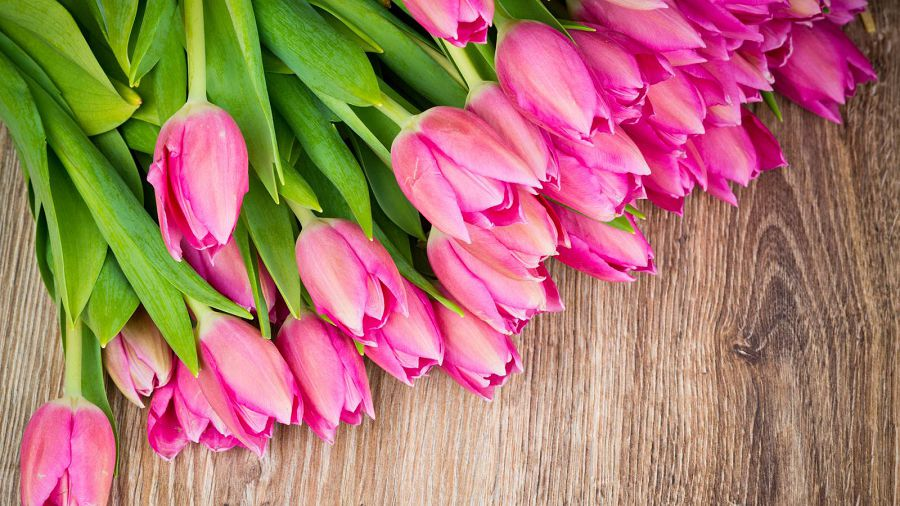 тюльпаны 8 марта