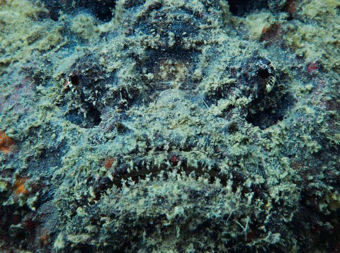 Топ-10 самых опасных рыб