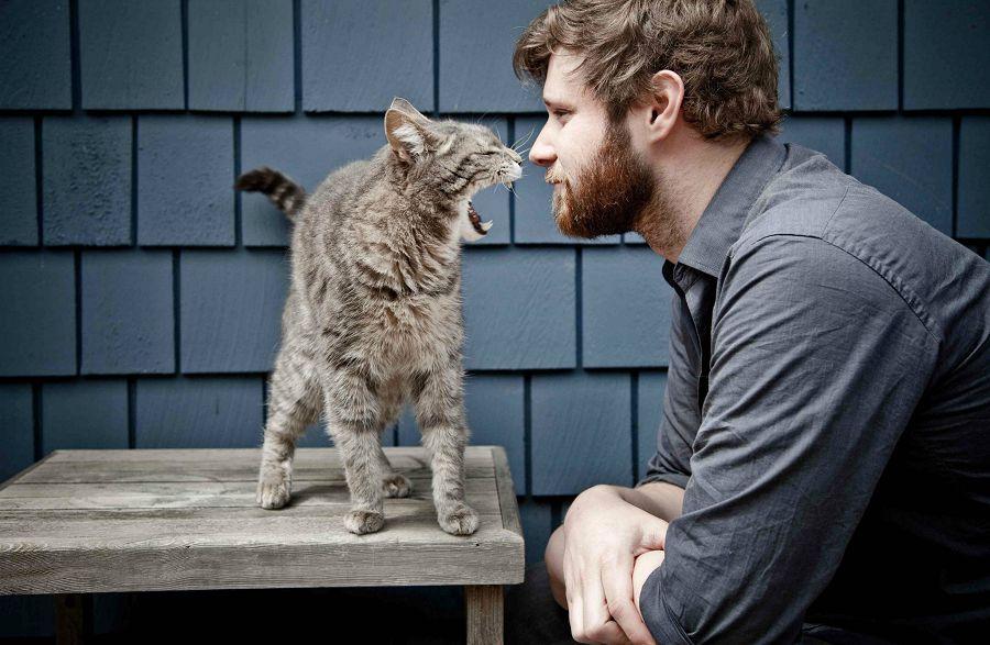 одинокие кошки