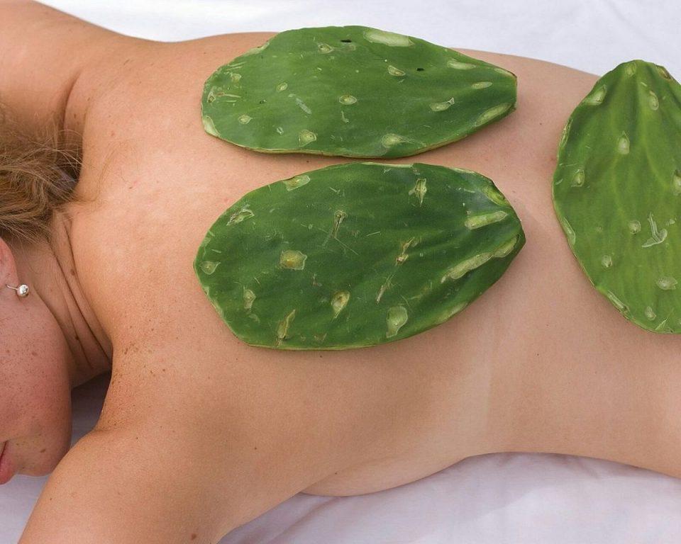 массаж кактусами