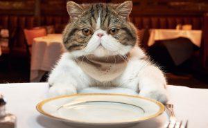 кот в ресторане