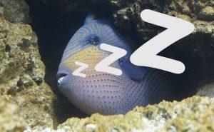 спящая рыба