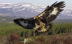 Топ-10 самых опасных птиц
