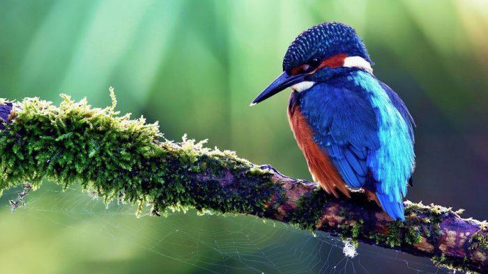 Красота птиц в фото