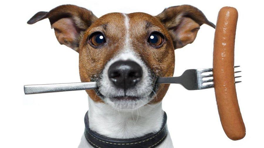собака с сосиской в зубах