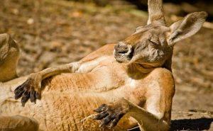Топ-10 интересных фактов об Австралии