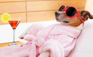 расслабленная собака