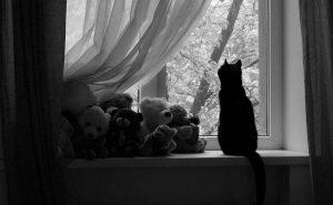 одинокая кошка