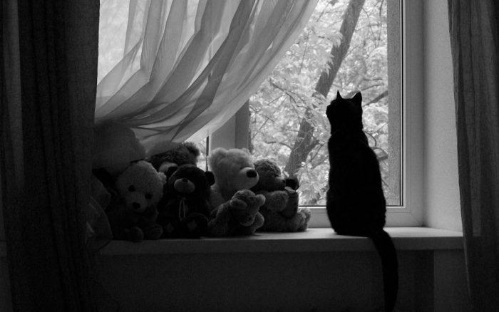 Почему кошки любят одиночество