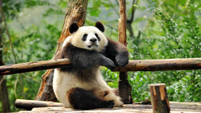 Топ-10 самых больших зоопарков мира