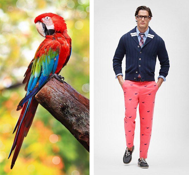 преппи. сравнение с попугаем