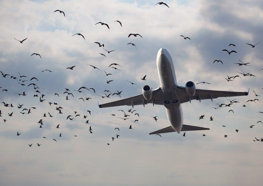 самолет и птица