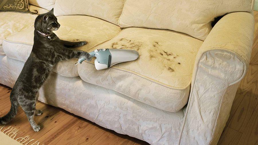 кошачья шерсть