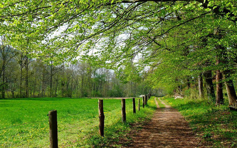 Пейзаж, дорога, поляна