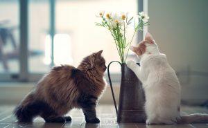 коты едят цветы