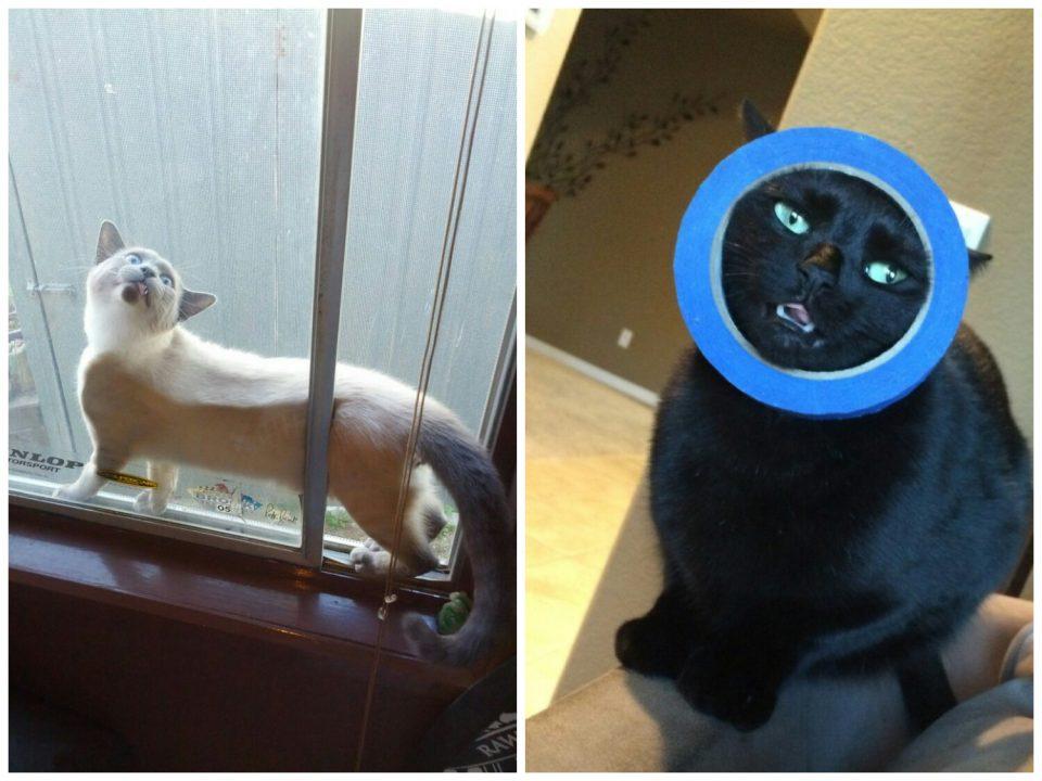 коты в ловушке
