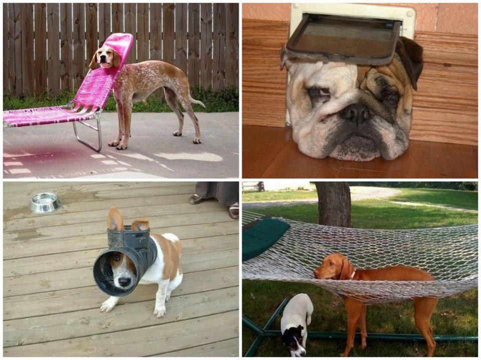 застрявшие собаки