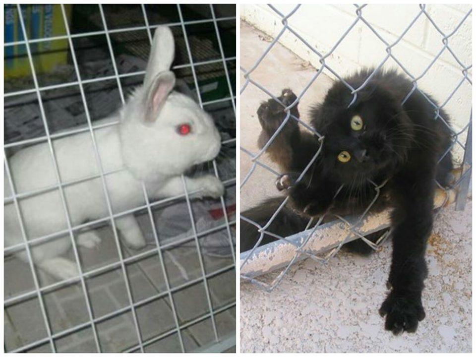 кот и кролик застряли