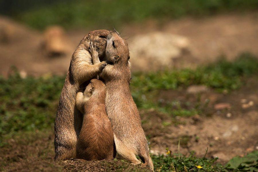 животные целуются