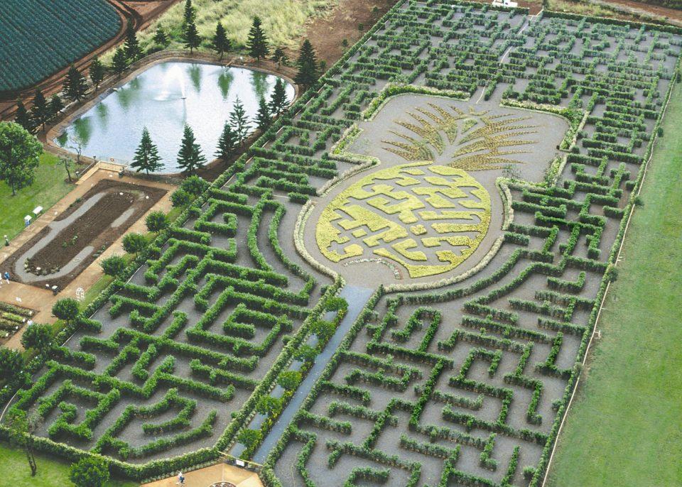 большой ананасовый лабиринт