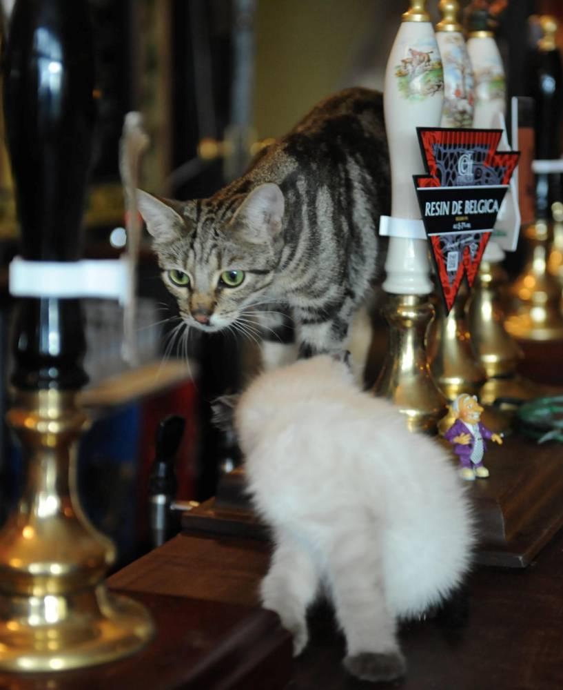 коты в пабе