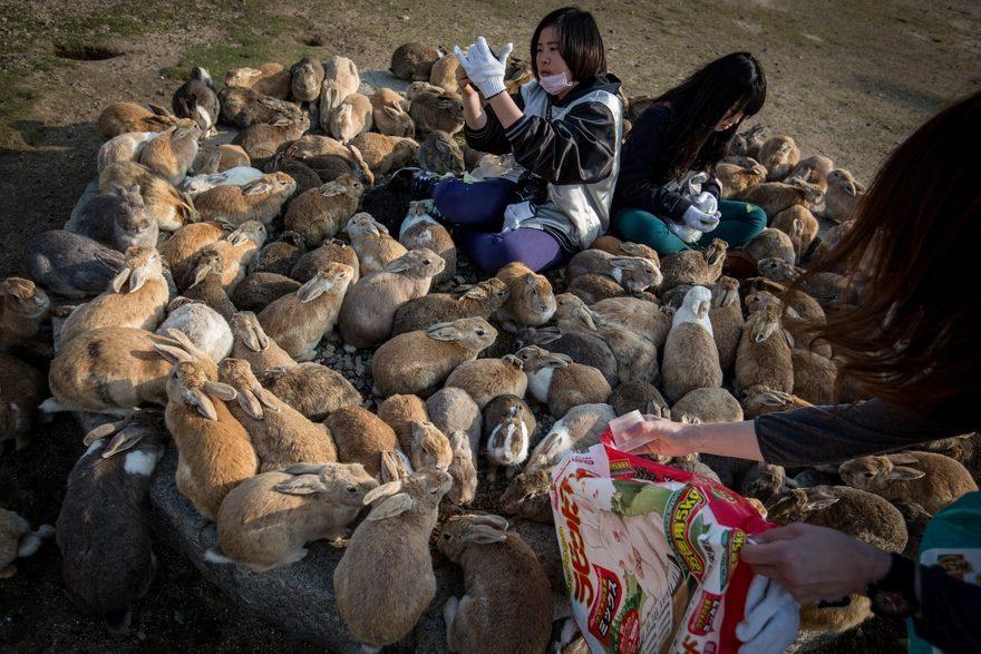 кролики Япония