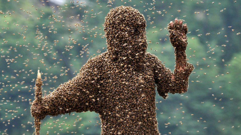 нашествия насекомых. Атака африканизированных пчел