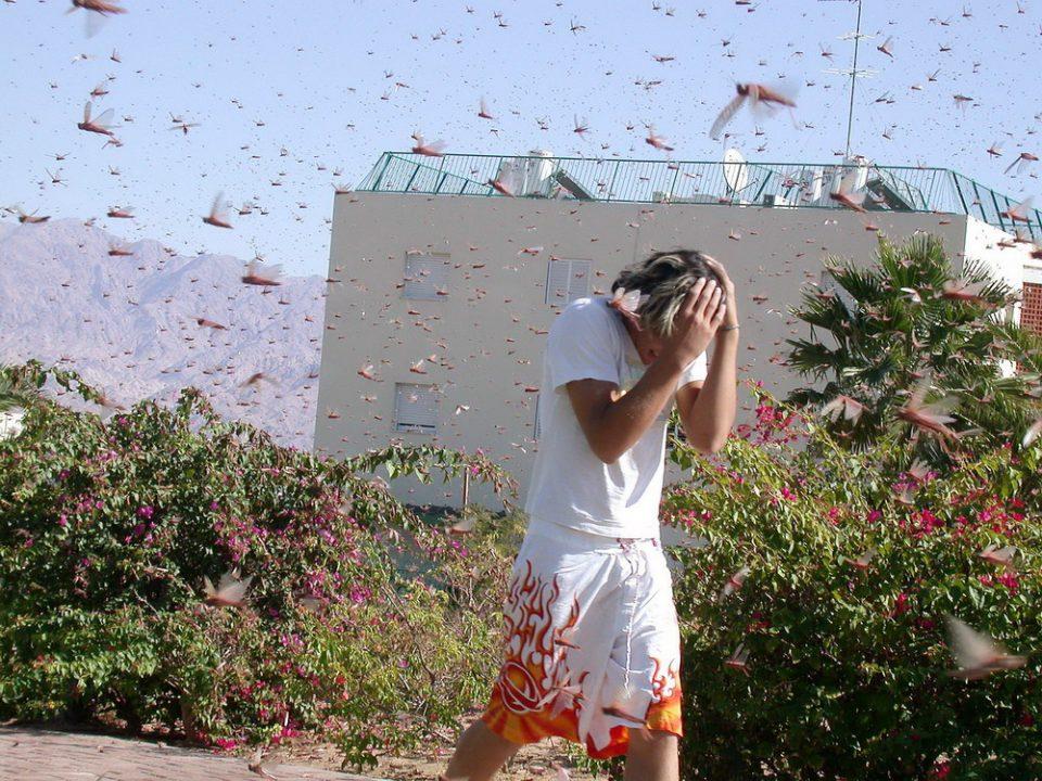 Самые жуткие в истории нашествия насекомых