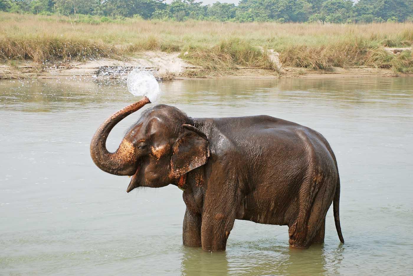 слон купается
