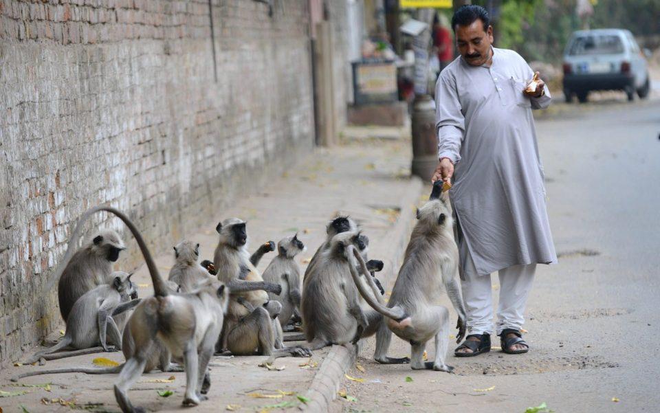 обезьян кормят