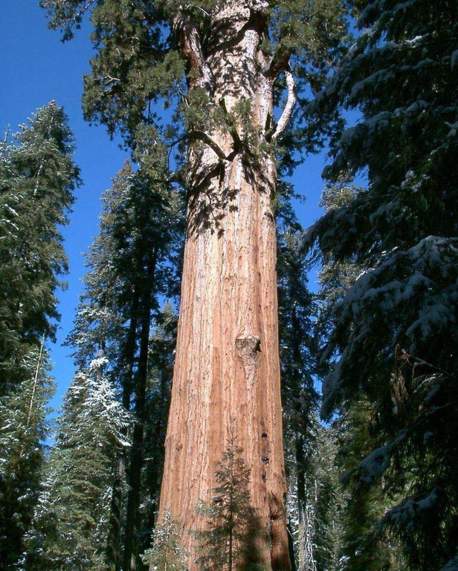 парадокс дерево