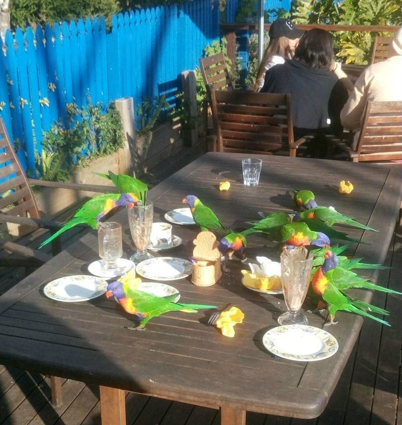 попугаи за столом