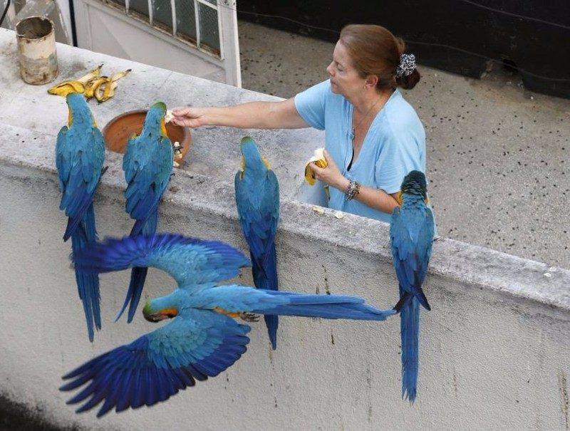 попугая кормят