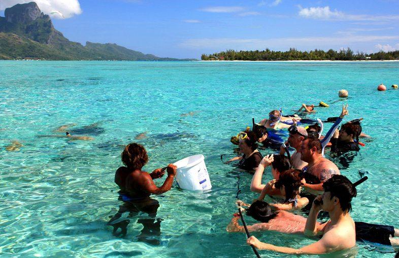 развлечения на островах. Покормить акул на острове Муреа